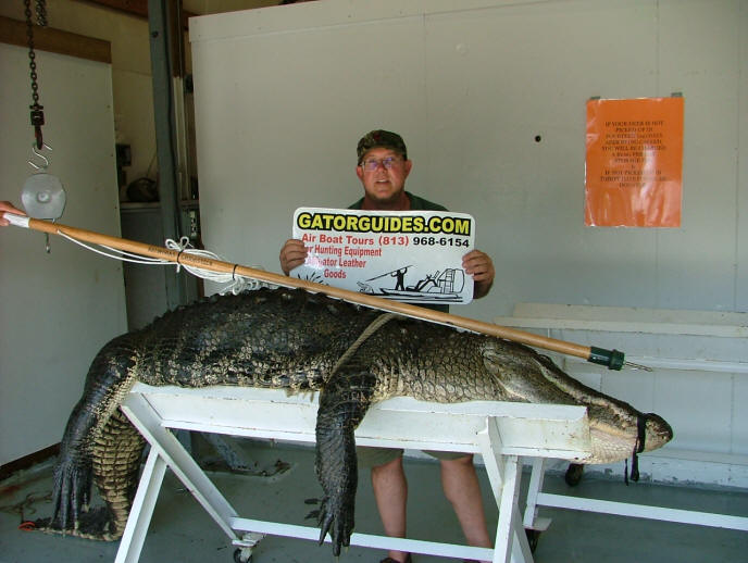 Corner of Capt Phils SC zone 3 gator. It weighted in at 575 lbs